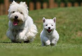 A couple of trendy white dogs